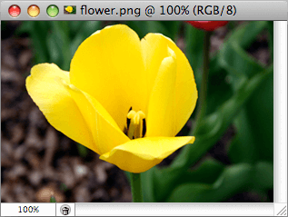 Flower - Image Viewer